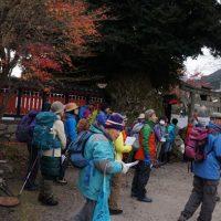 日吉大社の紅葉と植物についてーいきなりスダジの巨木あり